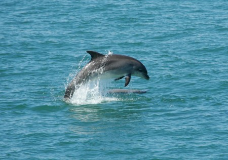Dolphin spotting in the bay.