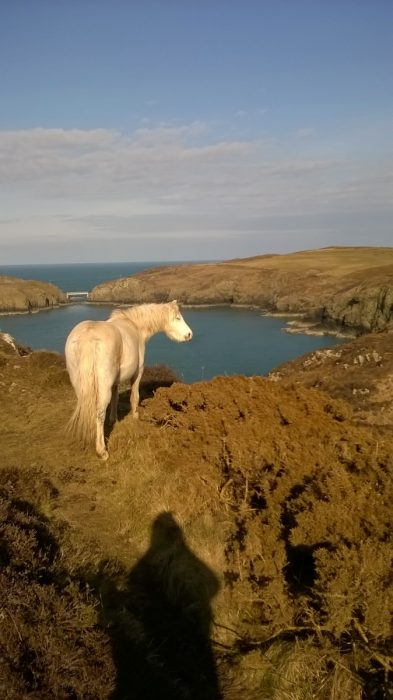 ponies on coast path